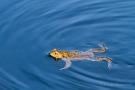Frosch im Jägersief 3