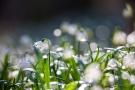 """Die unscharfen Blüten im Hintergrund sehen wie Lichtpunkte aus. Man nennt sie """"Flares"""""""