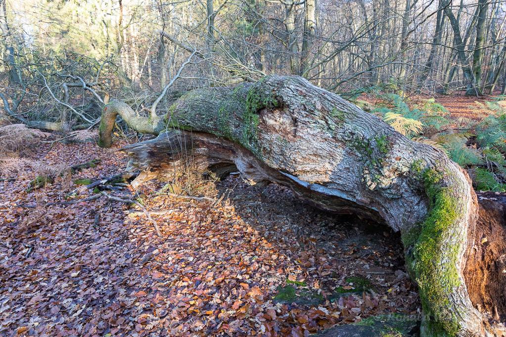 Pilze im Urwald Sababurg