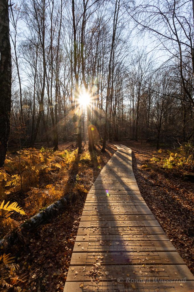 Sonne am Holzweg Urwald Sababurg