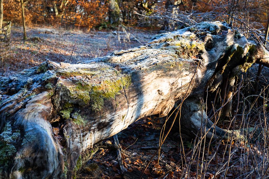 Totholz im Hutewald Halloh