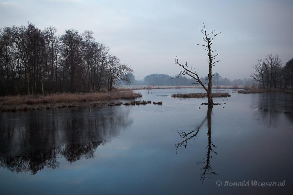 Toter Kormoranbaum im Rohdommel-Projekt am Morgen