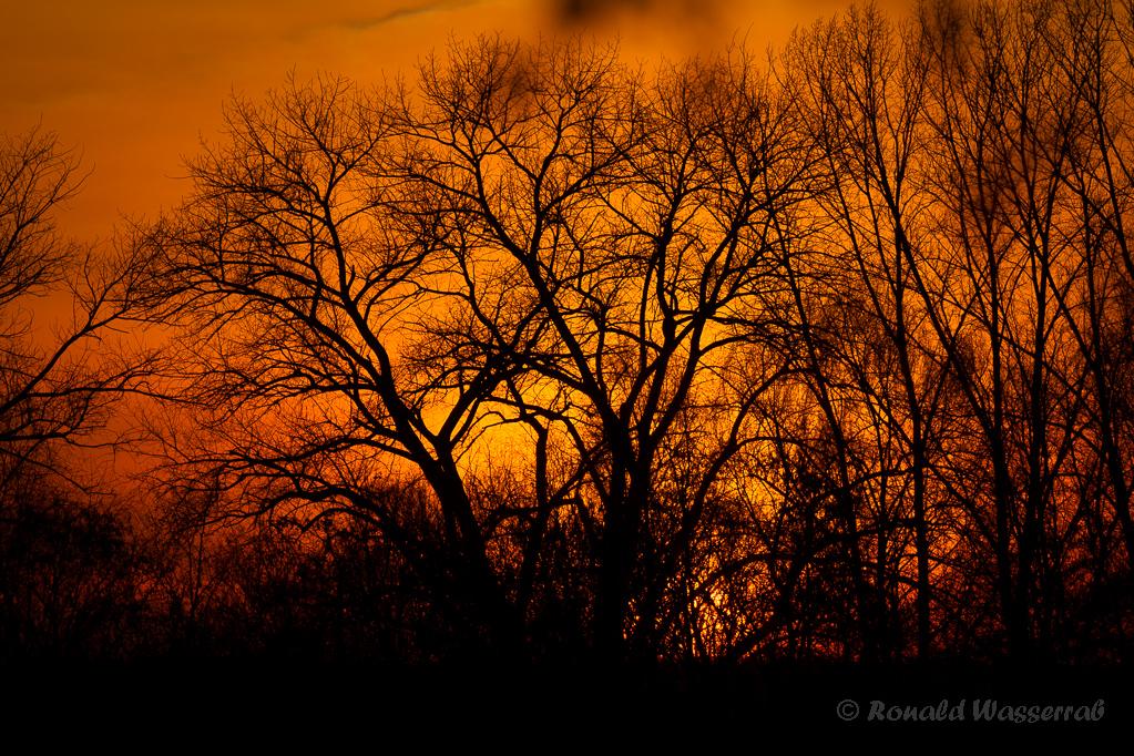 Baum-Silhouetten am Abend