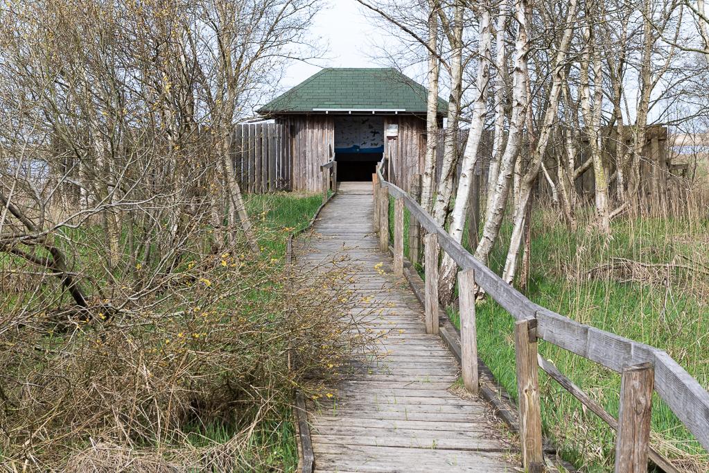 Beobachtungshütte im Schwimmenden Moor Sehestedt (Jadebusen)