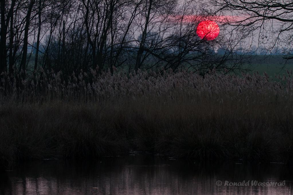 Sonnenuntergang am Rohrdommel-Projekt