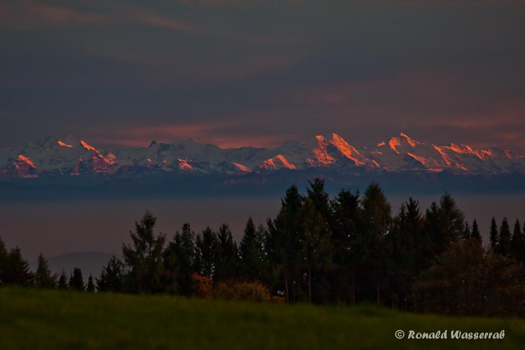 Alpenglühen von Höchenschwand (Südwarzwald) aus
