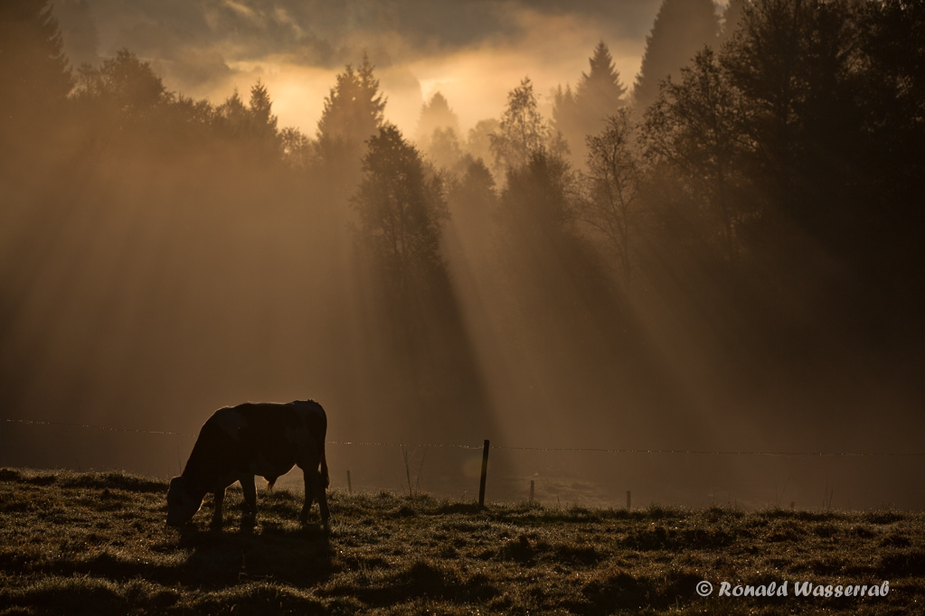 Morgenidyll am Schluchsee
