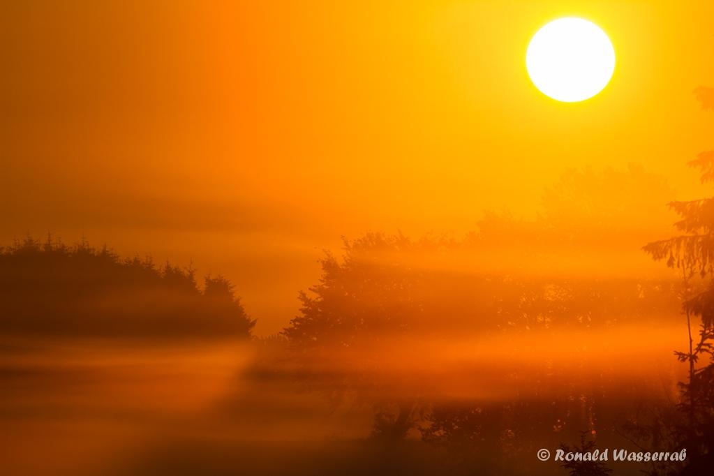 Morgennebel am Kranzbruch