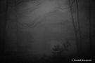 Entlüftungsschacht des Kallstollens im Nebel am Finkenbur