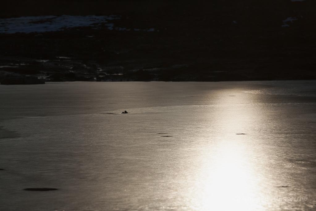 Eis auf dem Wehebachsee