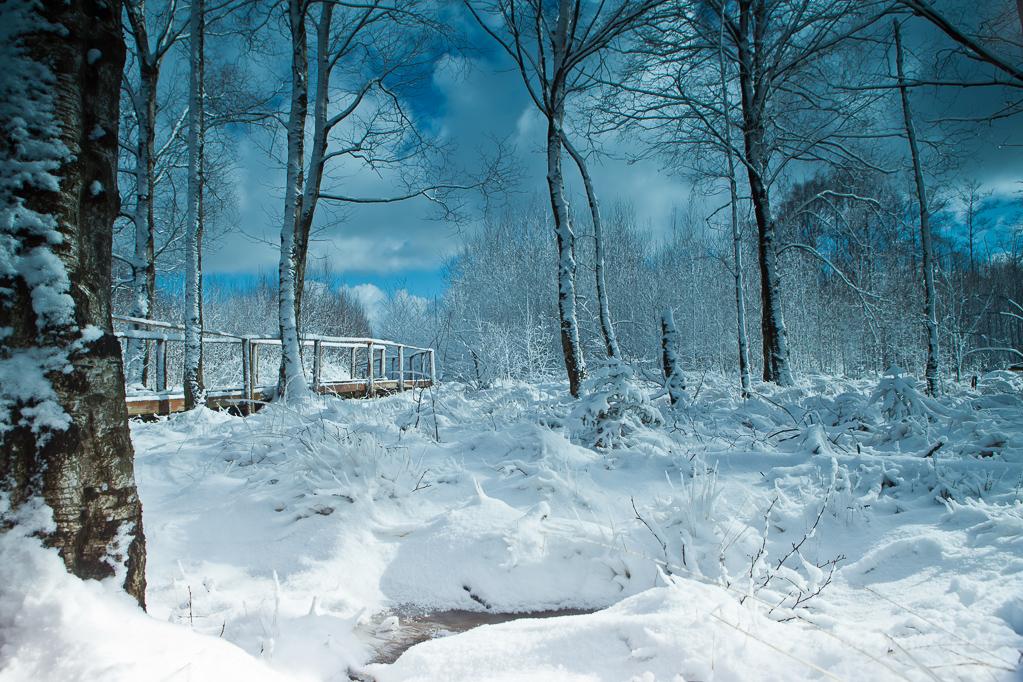 Winter im Todtenbruch (Ortsteil Raffelsbrand)