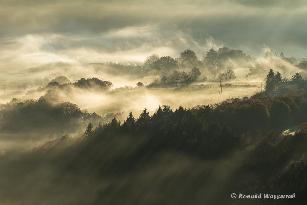 Morgennebel in der Eifel