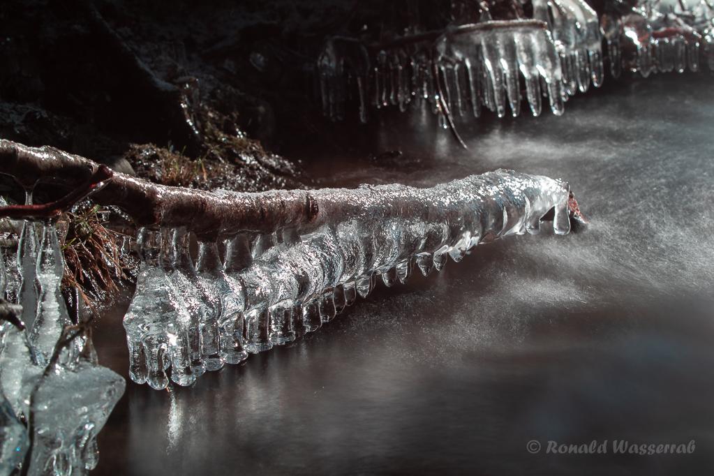 Ast mit Eisgebildenin der KallAst mit Eisgebildenin der Kall