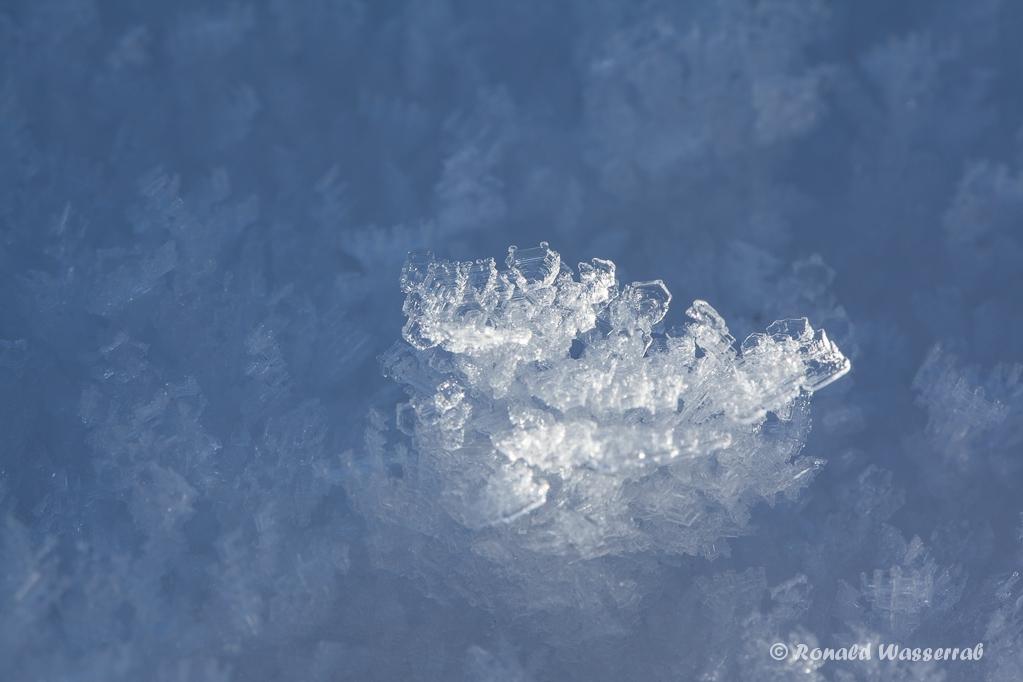 Schneekristalle im Moor