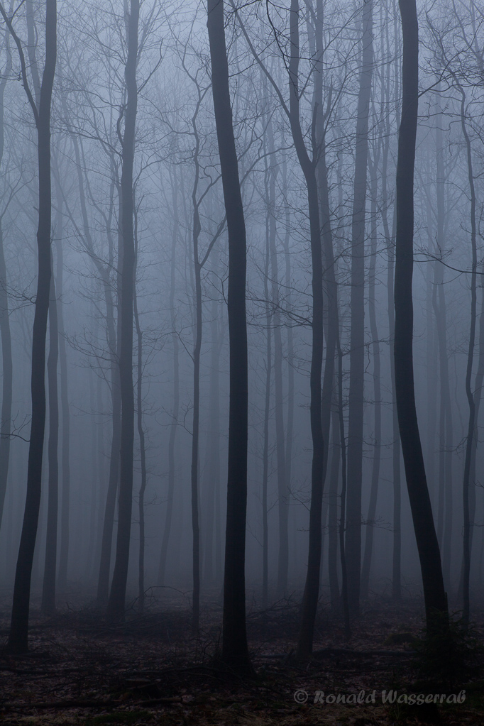 Bäume im Nebel (Nähe Finkenbur)