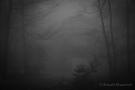 Entlüftungsschacht des Kallstollens im Nebel (Finkenbur)