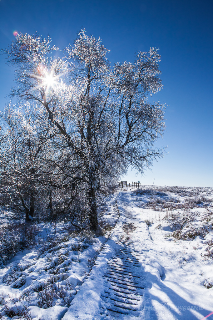 Sonnenschein im vereisten Baum