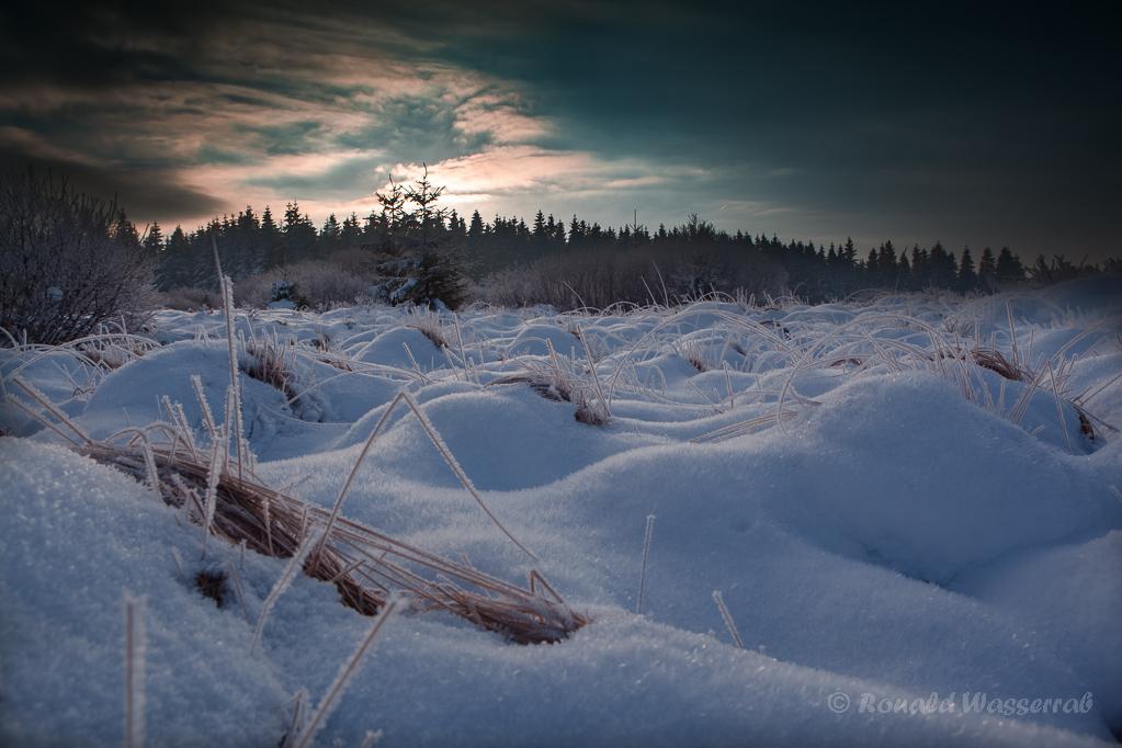 Morgentliches Schneefeld im Platten Venn (Brackvenn)