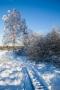 Vereister Baum und Steg im Brackvenn (Nahtsief)