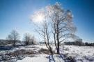 Sonne im Eisbaum