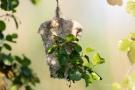 Beutelmeisen-Nest