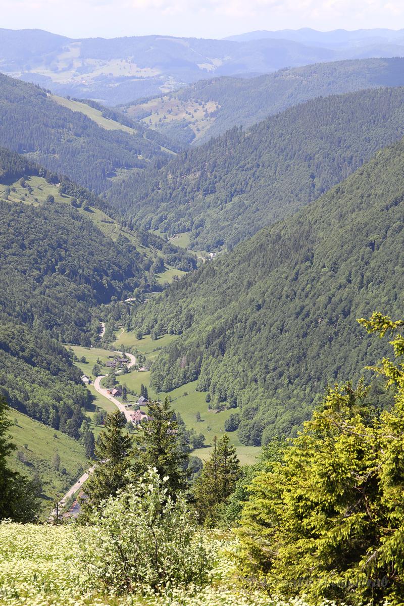 Blick vom Feldberg hinunter auf die Passstraße