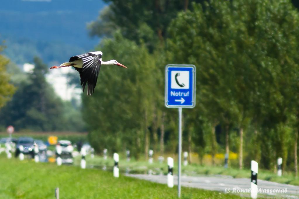 Notruf-Storch