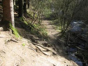 Schmaler Pfad im Fuhrtsbachtal