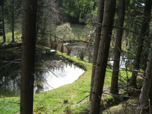 Frösche im Teich bei der Seebend