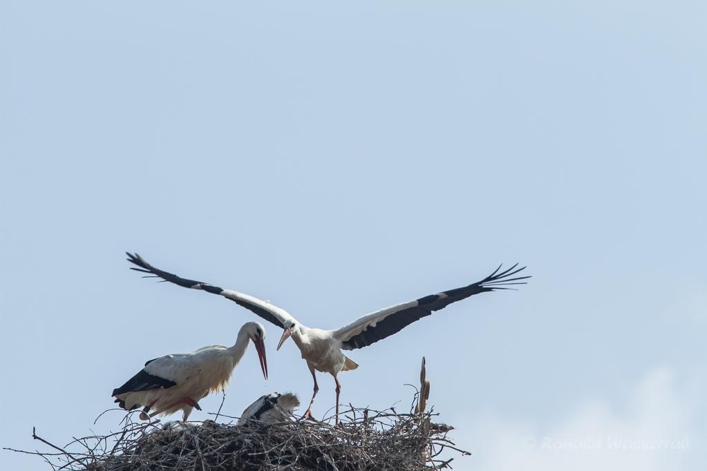 Start von Mama Storch