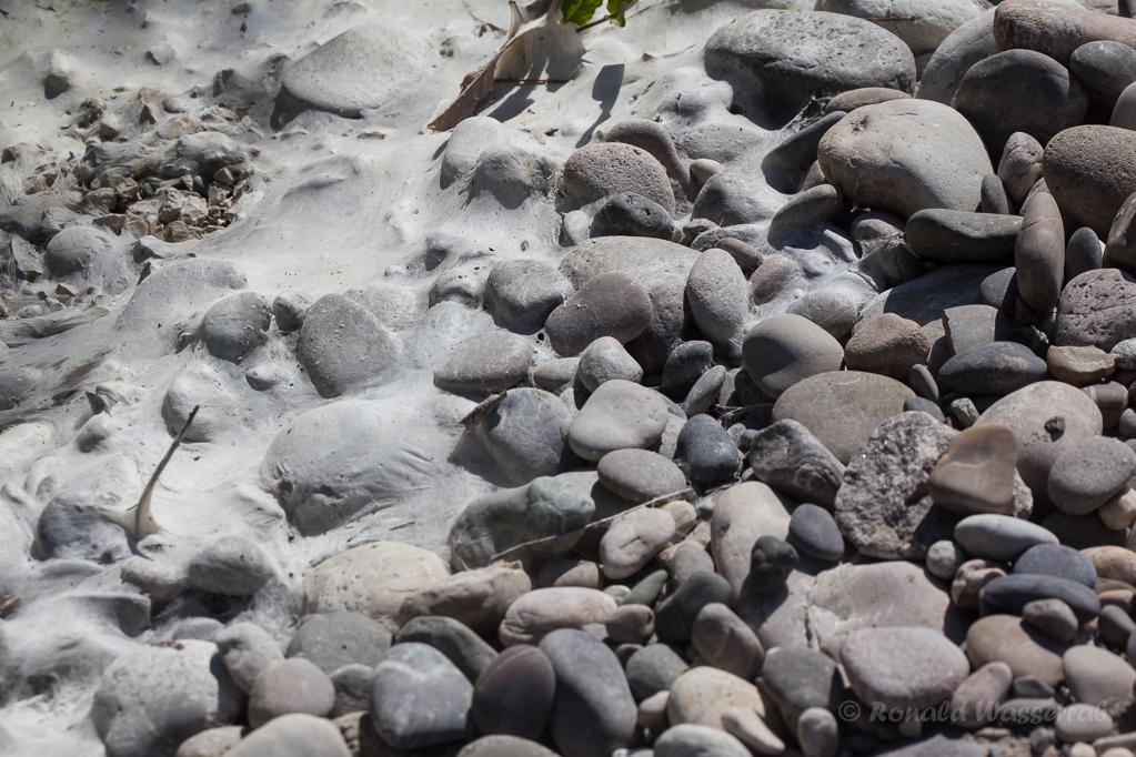 Kies mit getrockneten Algen am Rückhaltebecken der A5