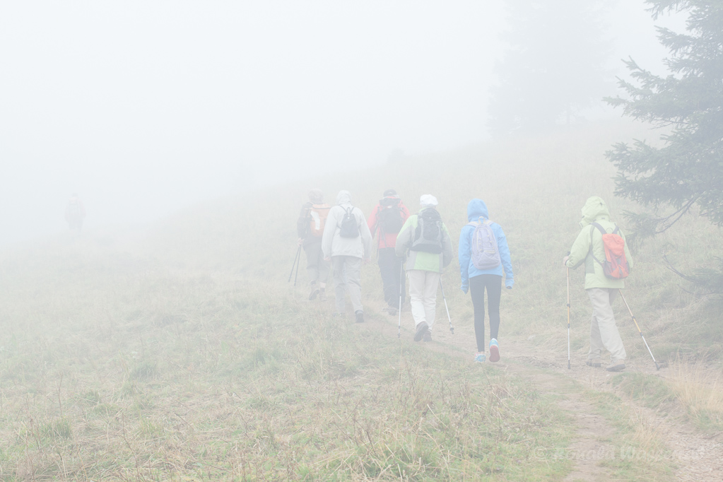 Nebel am Grüble des Feldbergs
