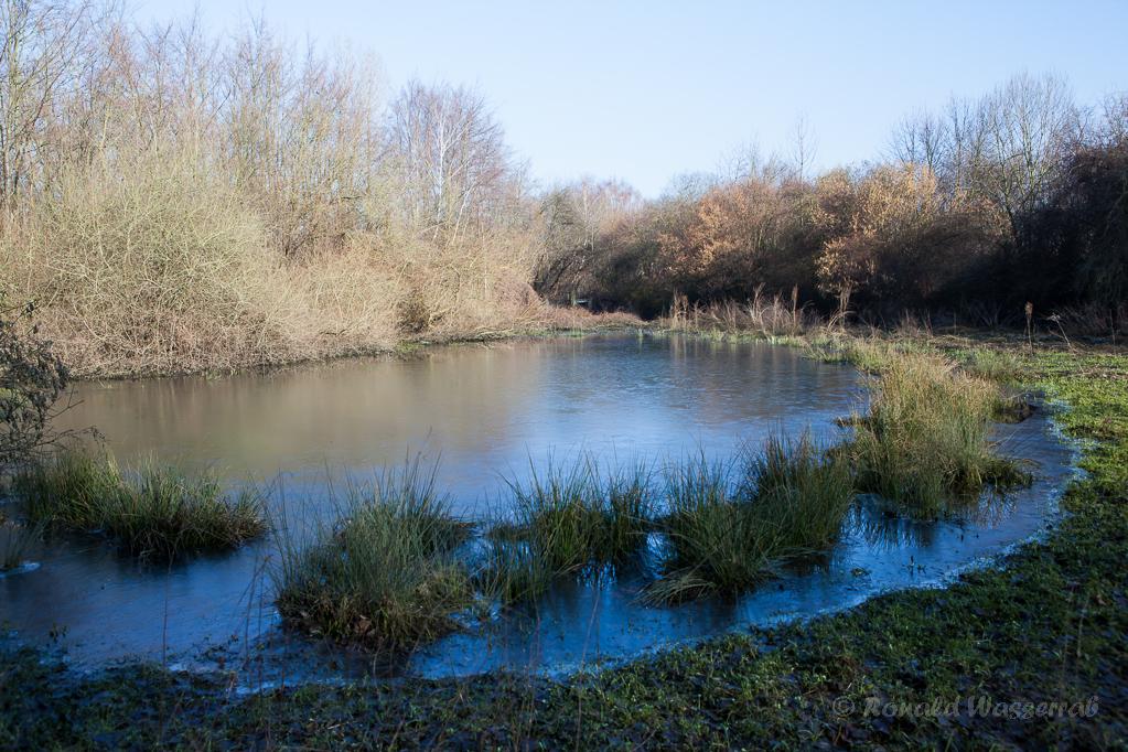 Teich am Badesee Düren
