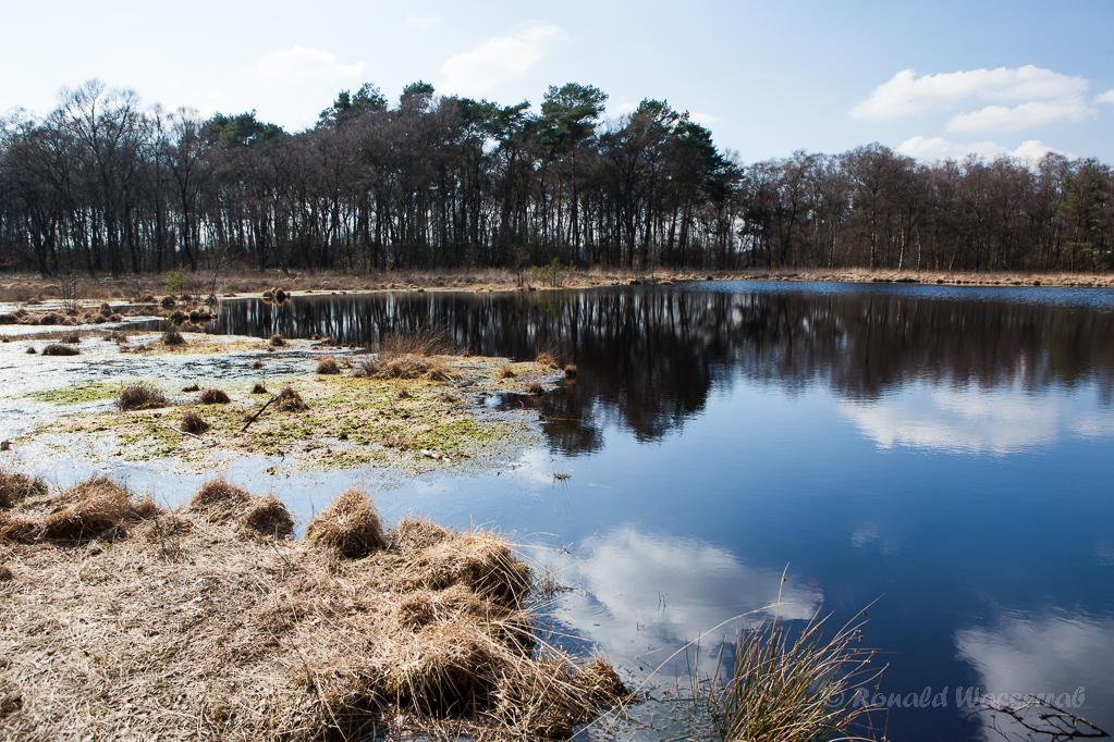 Das Hochmoor, die Heimat der Moorfrösche