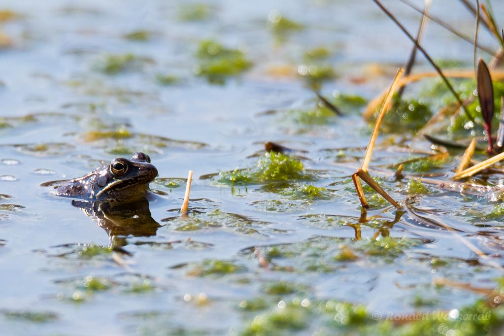 Und noch ein zweiter Frosch lässt sich blicken