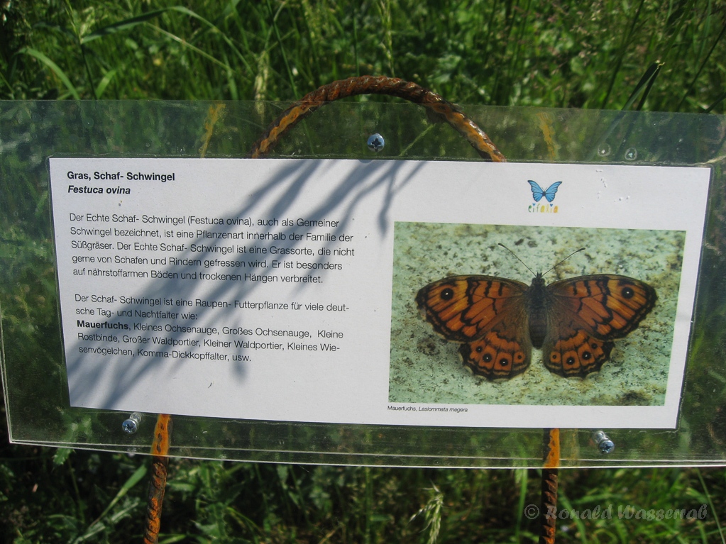 Beschilderung im Botanischen Schmetterlingsgarten