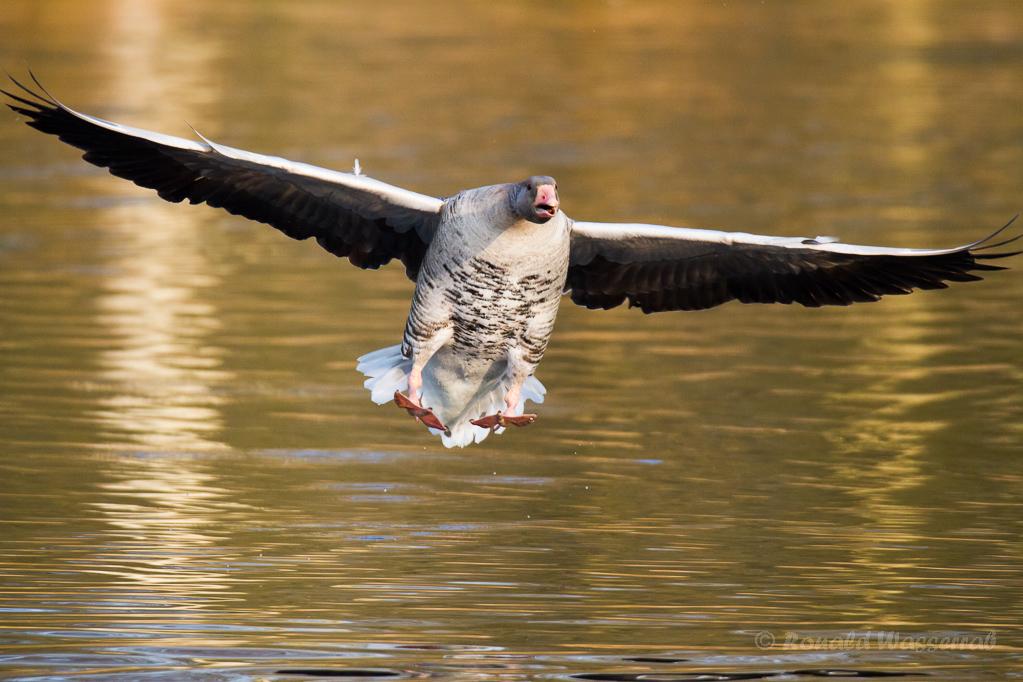 Landung nach dem Sieg