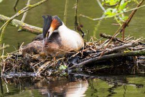 ...da bringen Nestkorrekturen ein wenig Abwechslung