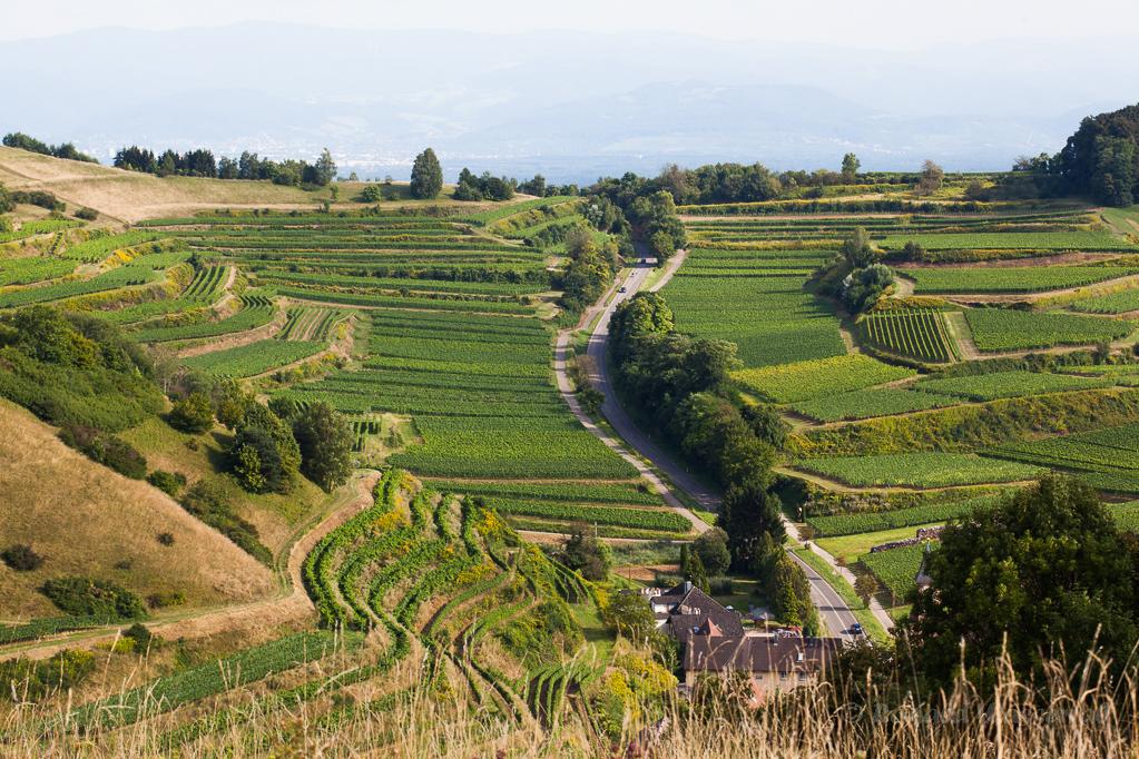 Aussicht vom Badberg auf Alt Vogtsburg und Freiburg