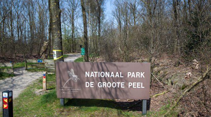 Blaue statt goldene Kehlen in Holland – Blauwborstjes (Blaukehlchen) in De Groote Peel