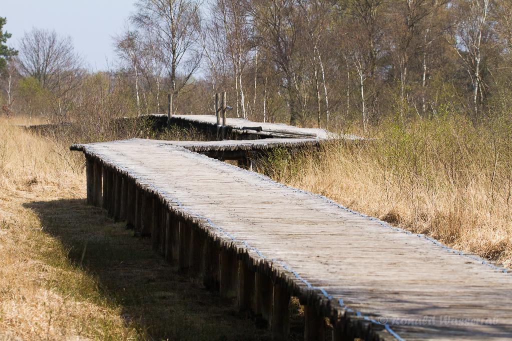 Holzsteg durch das Moor
