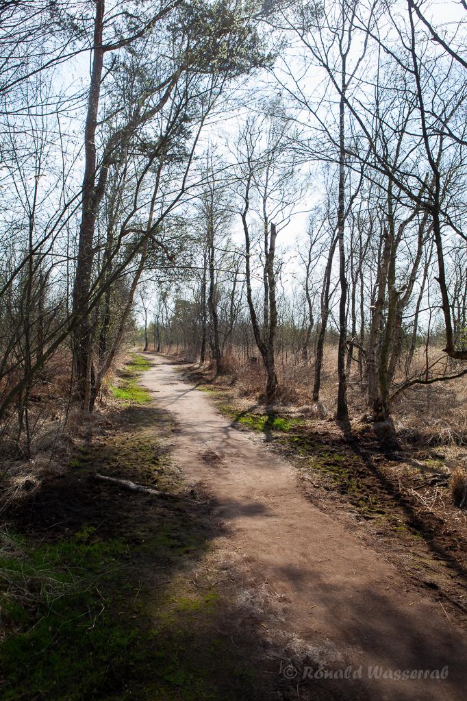 Weg in De Groote Peel