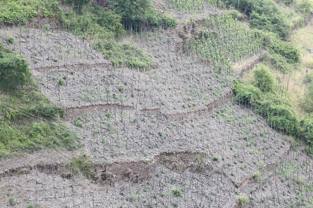 Steile Weinberg-Brache am Apolloweg