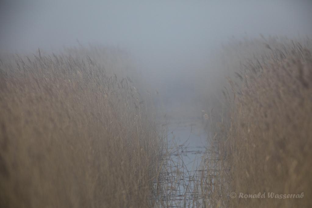 Nebel am Darßer Ort