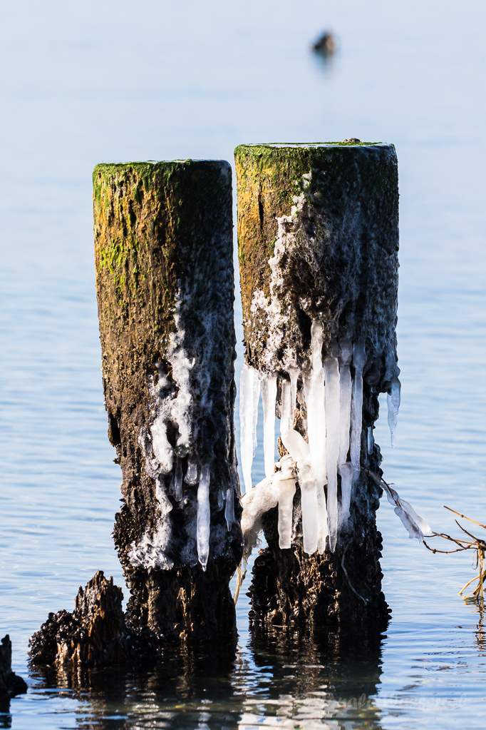 Bune mit Eis in Ahrenshoop