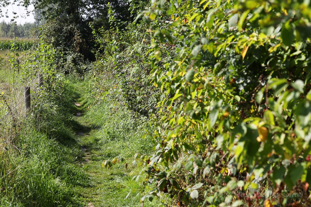 Weg an den Brombeeren der Laubfrösche