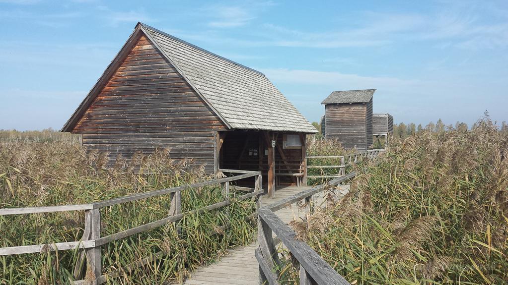 Hütte und Beobachtungsturm am Federsee