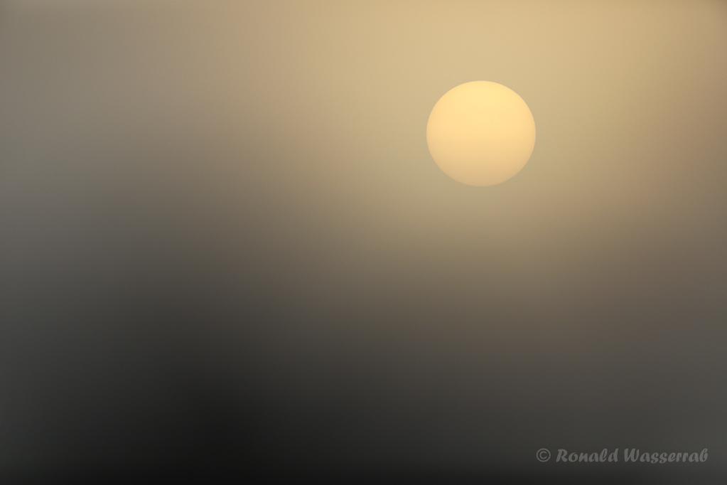 Morgensonne im Nebel am Federsee