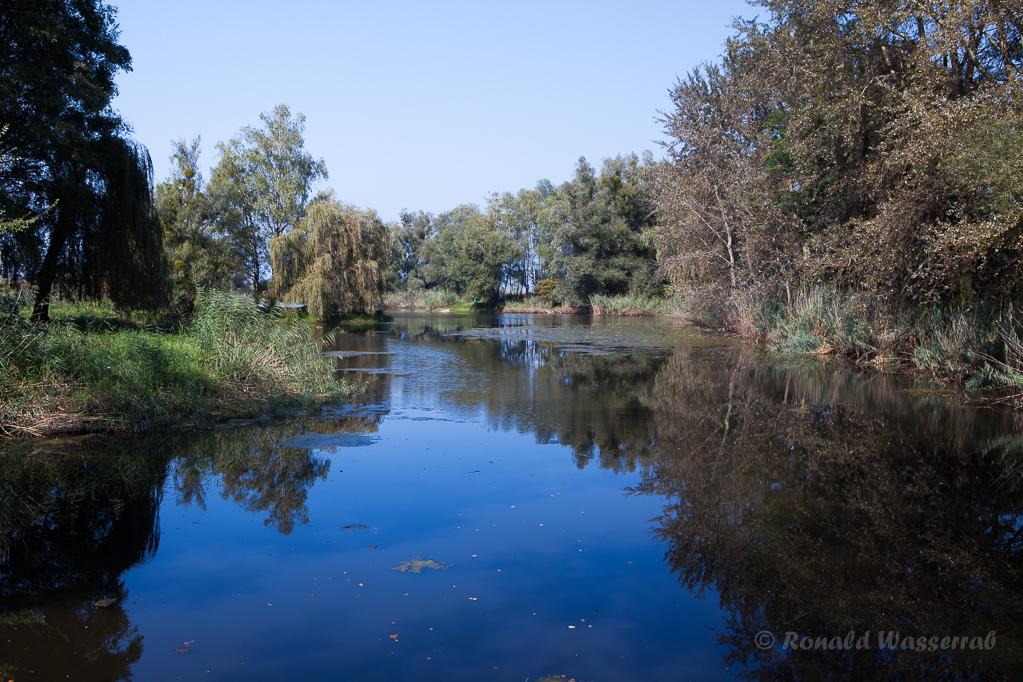 Schleienloch am rechten Rheindamm