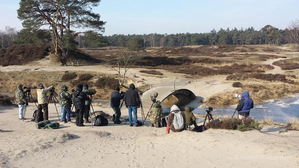Fotografen warten auf die Kiefernkreuzschnäbel